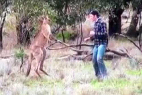 04122016-kangaroo2