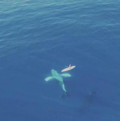 06122016-humpbackwhales