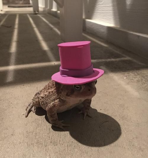 Жаба стала настоящей модницей благодаря милым шляпам