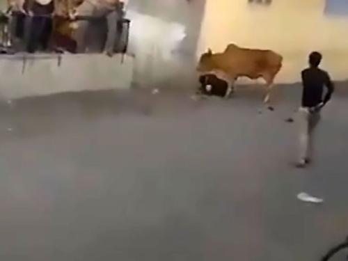 бешеная корова