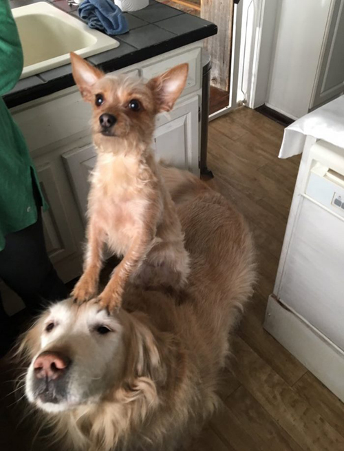 дружба двух собак
