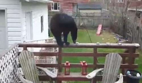 медведь с кормушкой