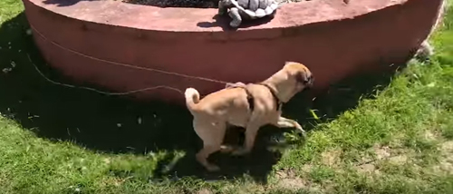 шутка над собакой
