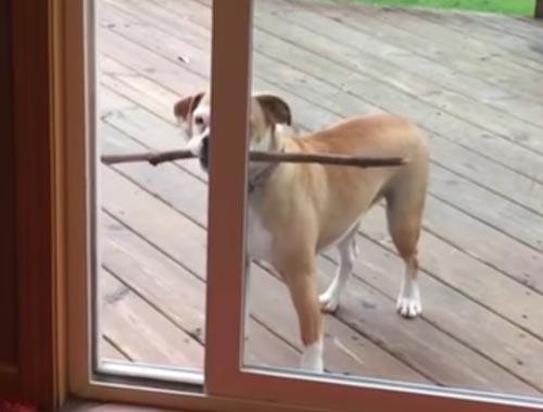 слишком длинная палка