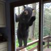 медведь хочет печенье