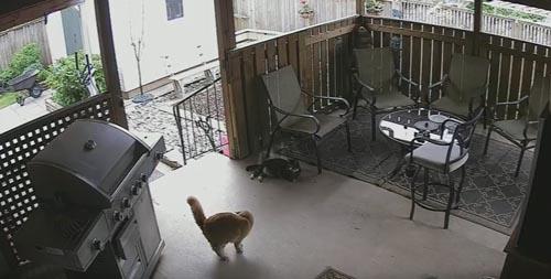 кошка и её хвост