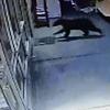 медведь врезался в витрину