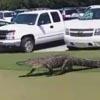 аллигатор на автостоянке