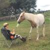 лошадь научилась подавать вино