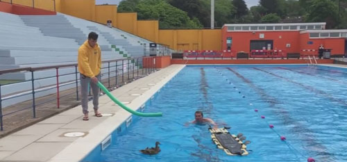 утята в бассейне
