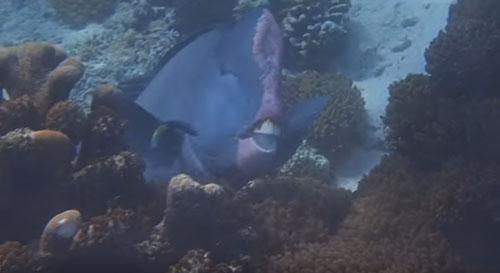 улыбающаяся рыба