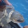 черепах спасли от мусора