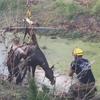 лошадь застряла в густой грязи
