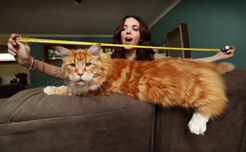 крошечный котёнок вырос в огромного кота