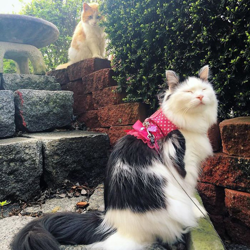 кот влюбился в соседскую кошку