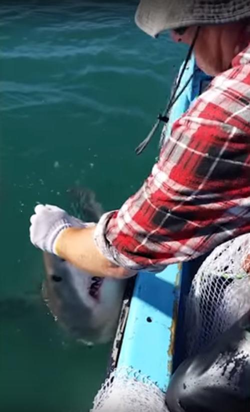 акула попыталась украсть сеть