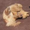 собака занимается фитнесом