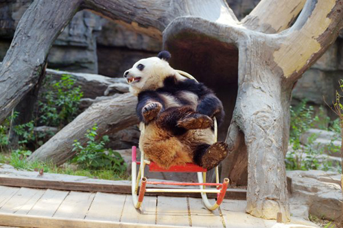 панда в кресле-качалке