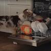 собака-посудомойка