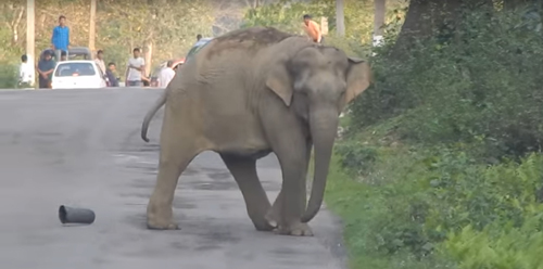 слон-футболист