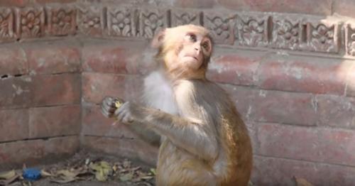детёныш обезьяны и муха