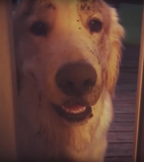 щенок вывалялся в грязи