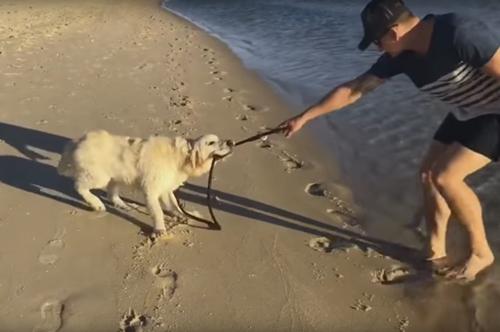 пёс ненавидит поводок