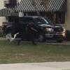 лебедь погнался за полицейским