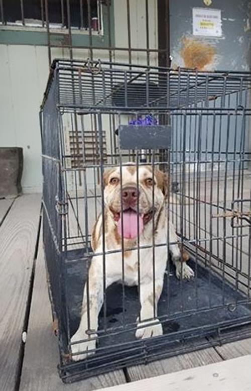 собака с заклеенной пастью