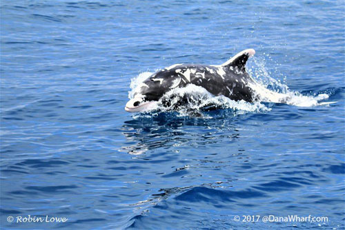 дельфин с редким окрасом
