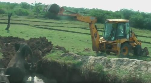 слонов спасли из ямы