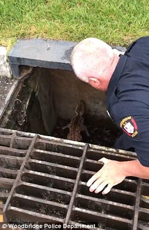 полицейский спас оленёнка