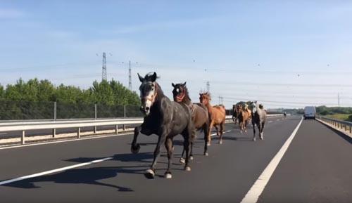 лошади бежали по шоссе