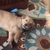 щенок не поддался гипнозу