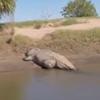крокодил напугал рыбаков