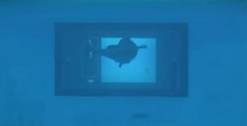 сенсорный экран для дельфинов