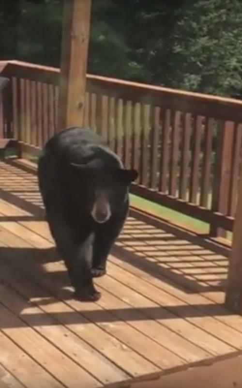 медведь поел из птичьей кормушки