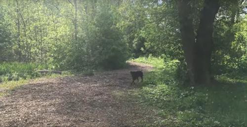 собака сыграла с хозяйкой в прятки