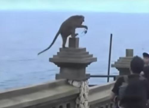 обезьяны выменивают вещи на еду