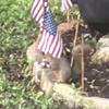 белки украли флаги для гнезда
