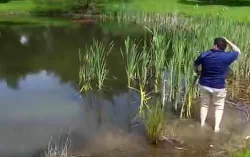 гольфист запустил клюшку в пруд