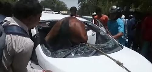 лошадь врезалась в автомобиль