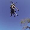 жеребца спасли с помощью вертолёта