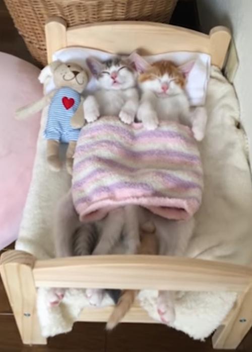 котята засыпают только вместе