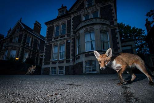 дикие животные, живущие в городах