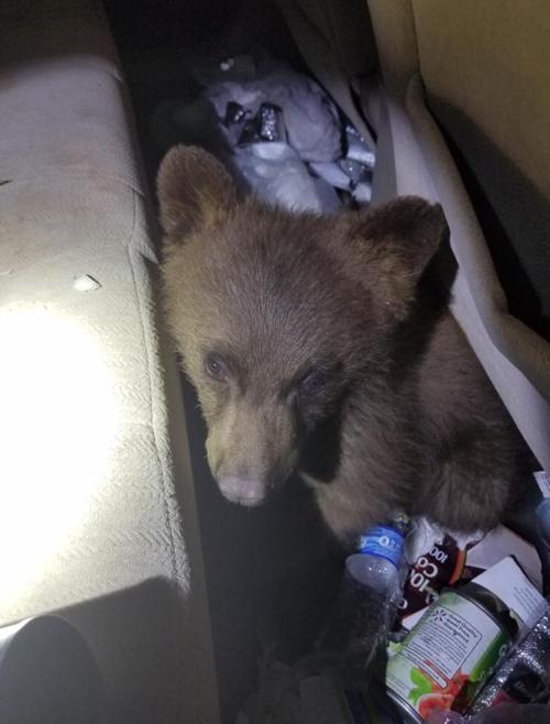 медвежонок запер сам себя в машине