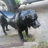 собаку отмыли от гудрона бензином