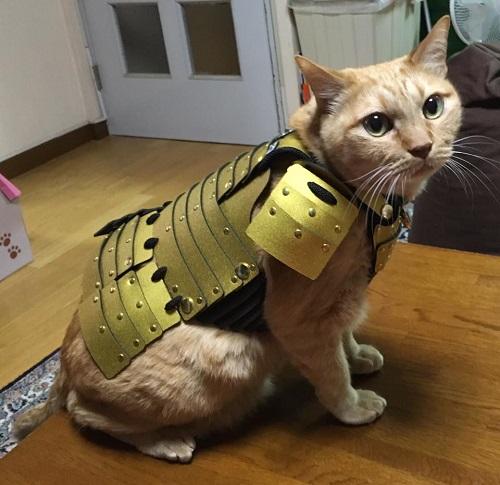 самурайские доспехи для животных