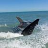 смельчак приблизился к акуле