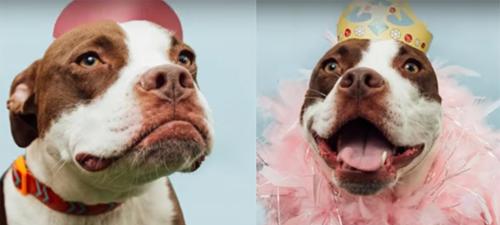 весёлые фотографии собак
